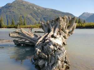 log beached on the Stikine River