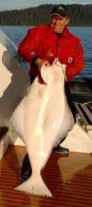 60 lb halibut caught in kayak