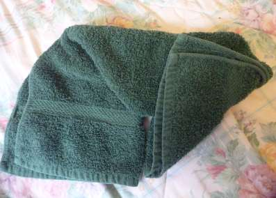 cruise ship towel animals