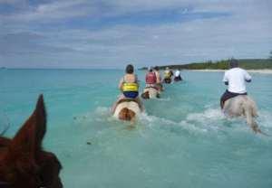 horses pretending to swim