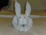 cruise ship towel animals