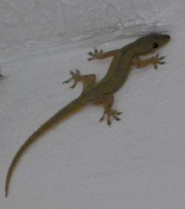Lizards On The Roof Diving And Snorkeling Anilao