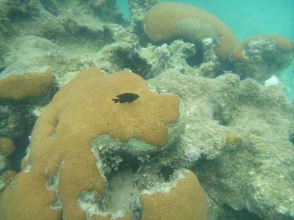 under the sea Isla Rotan