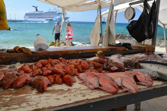Grand cayman cruise stories for Local fish market
