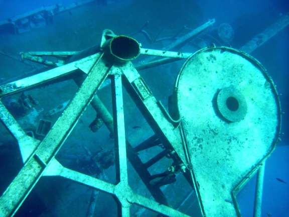 structure on the Kittiwake