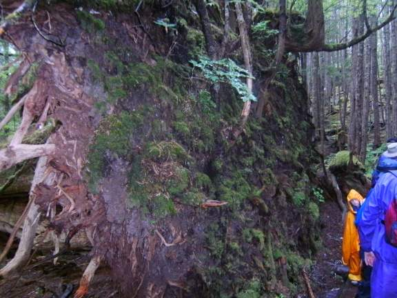 rainforest hike near Ketchikan, Alaska