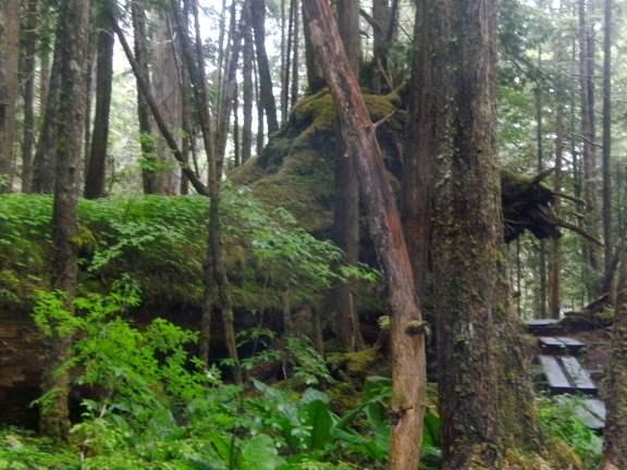 Ketchikan Alaska, boardwalk trail