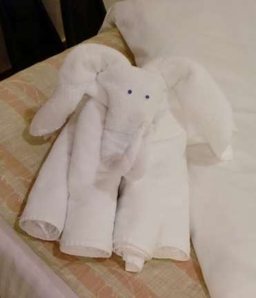 towel elephant on Carnival Liberty