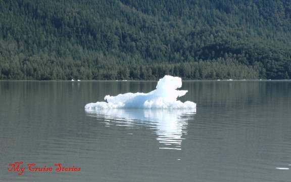 duck ice
