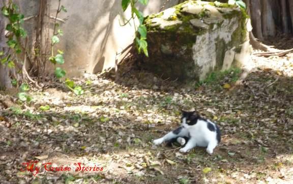 stray cat in San Juan Puerto Ricp