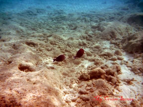 underwater photo of fish