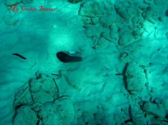 shoes don't belong underwater