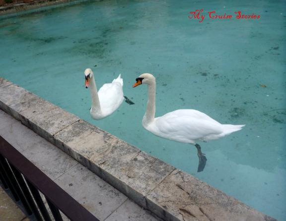 swans at LeSeu cathedral
