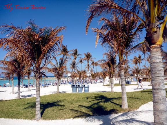 hurricane damaged trees