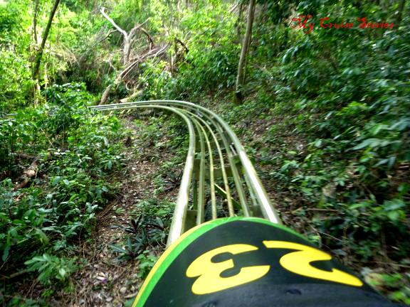 Jamaican Bobsled roller coaster through the rainforest