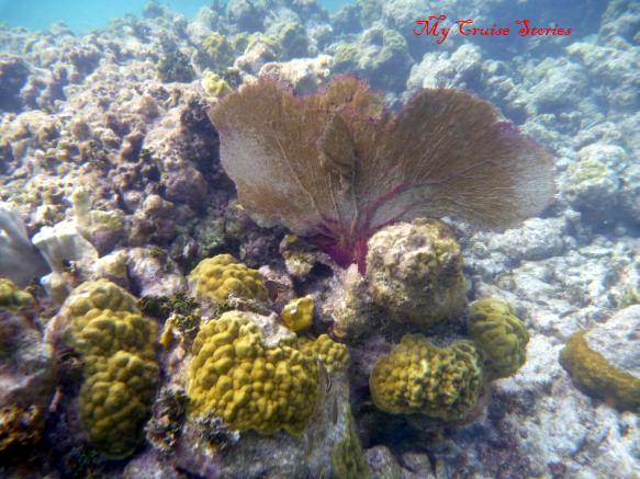 shallow water Caribbean coral