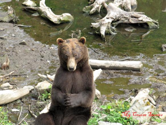 praying bear