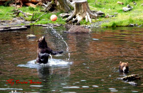 this bear had a great time playing with a bal hanging on a rope over a pond