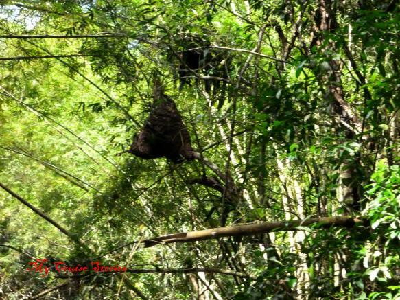 hanging termite nest