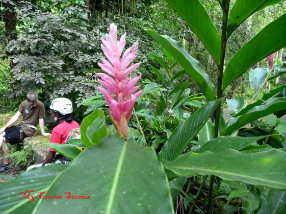 jungle flower