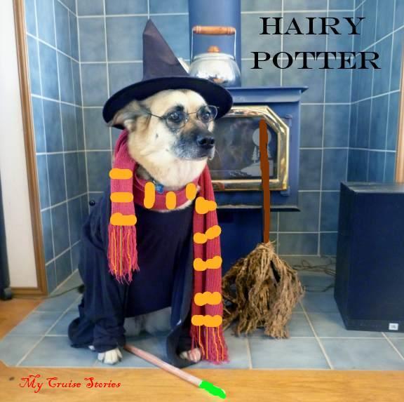 dog as Harry Potter