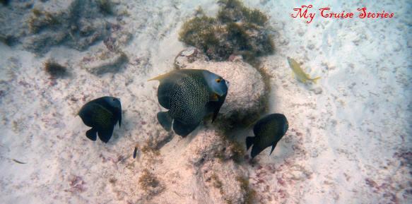 fish seen snorkeling
