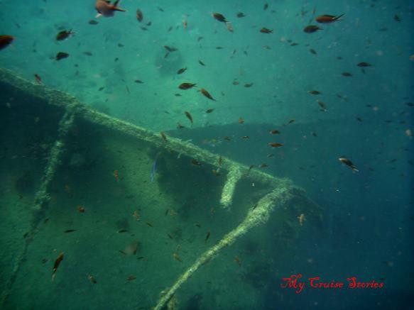 fish on shipwreck