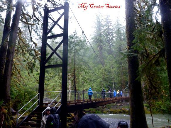 bridge on rainforest trail