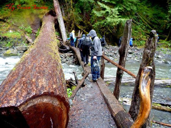 bridge made from fallen logs