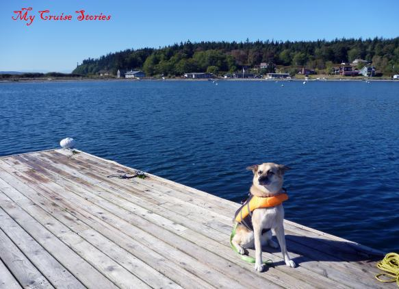 dog in a lifejacket