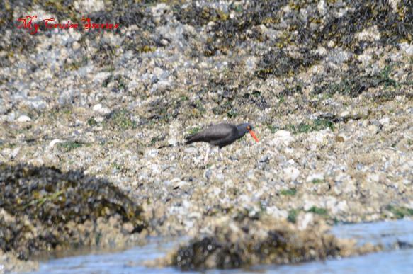 long legged seabird