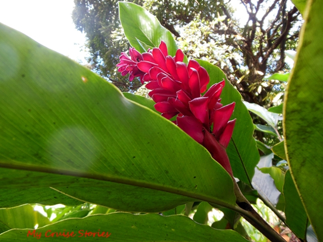 tropical flower