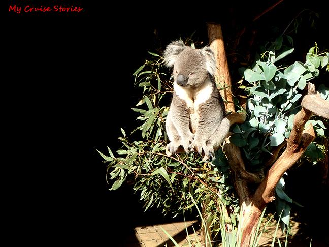 sleepy marsupials