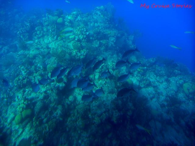 fish under the sea