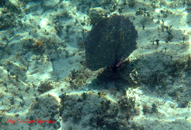 under the sea in Cozumel