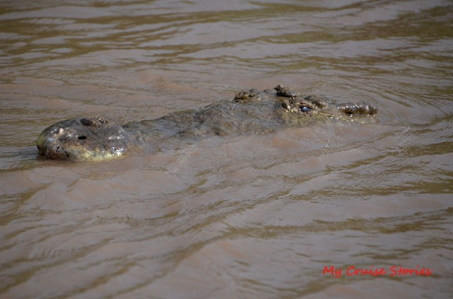 Costa Rica crocodile