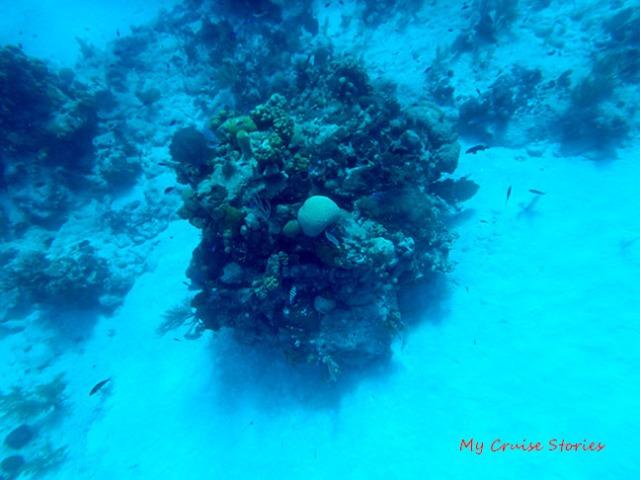 sea life likes structure