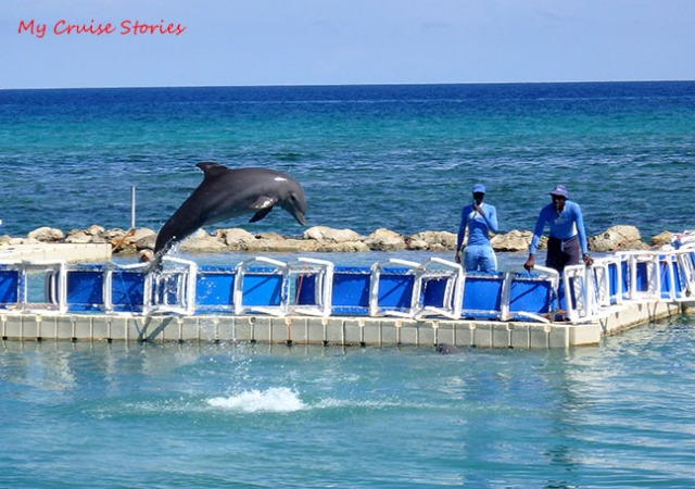 trained dolphin