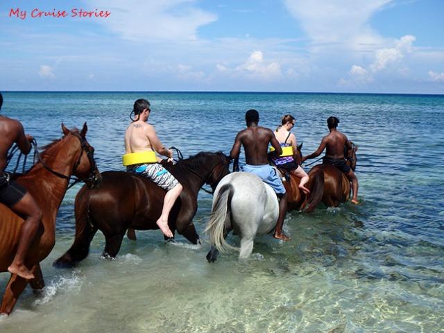 horses going for a swim