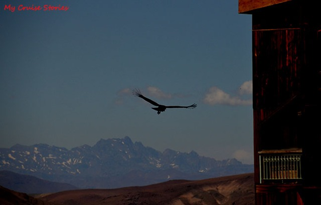 condor in the Andes Mountains