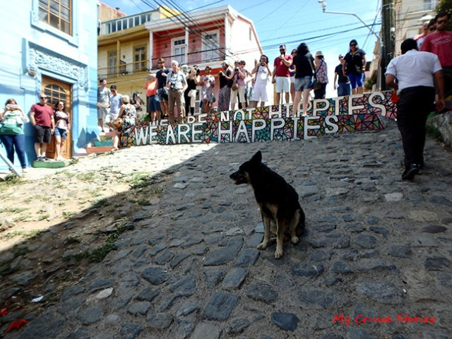 street dogs of Valparaiso
