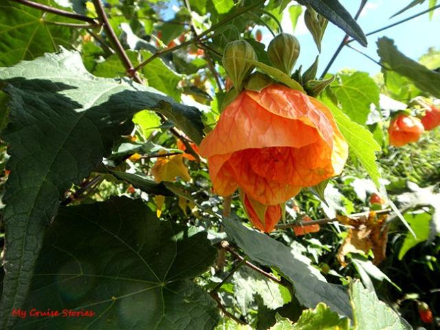 flower in New Zealand