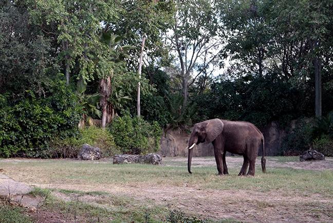 Disney World safari
