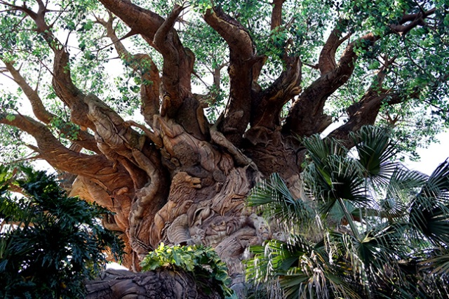 tree theater at Disney World