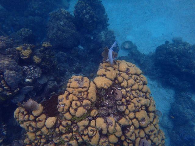 Chankanaab underwater
