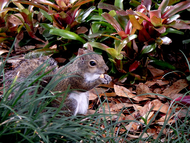squirrels lived all over the area near Disney