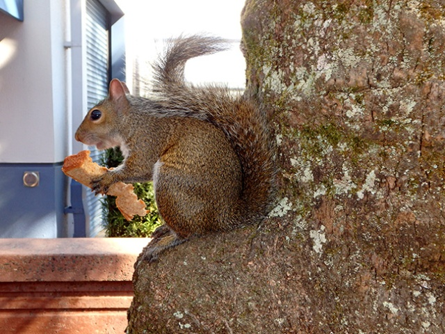 squirrel with a sandwich