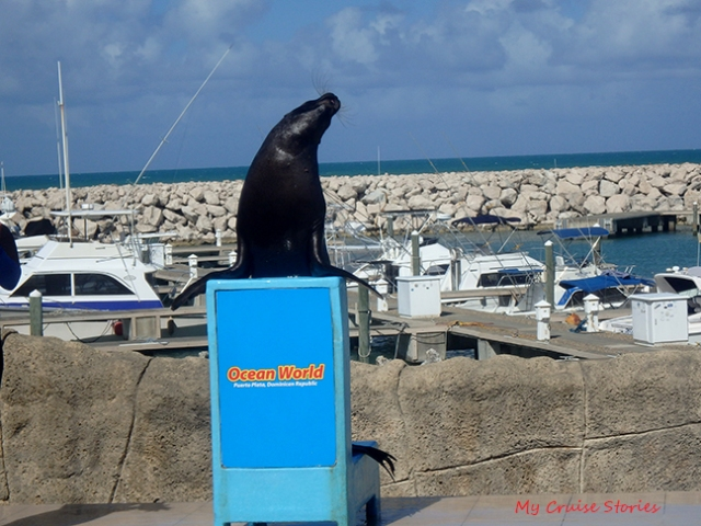 Ocean World sea lion