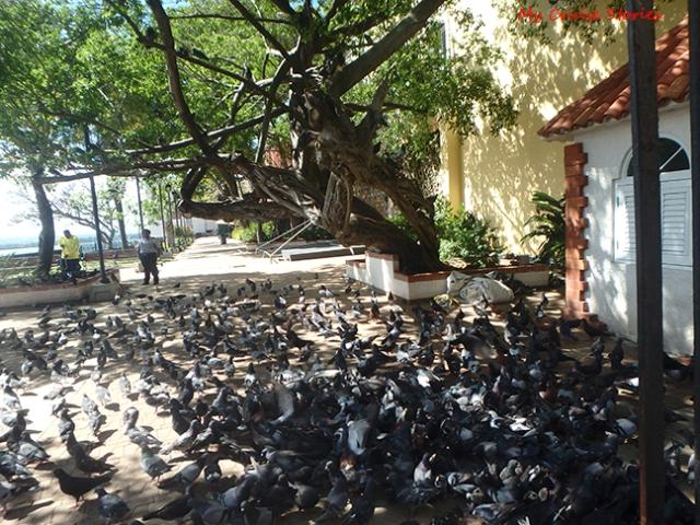 Pigeon Park