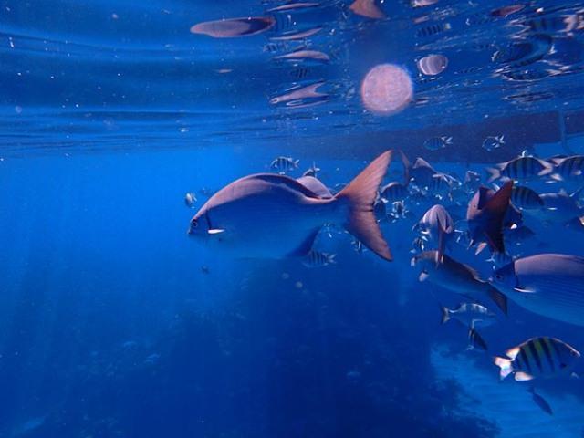 fish in Bermuda